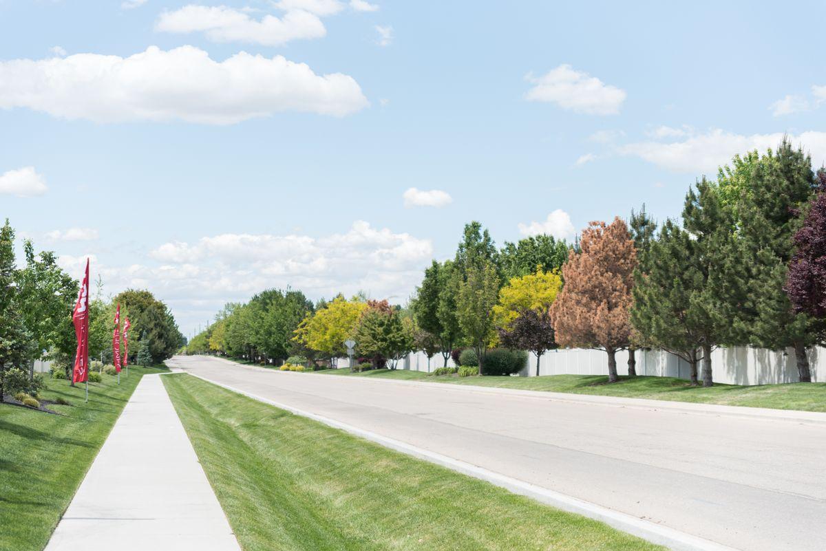cbh-homes-pinefield-4.jpg